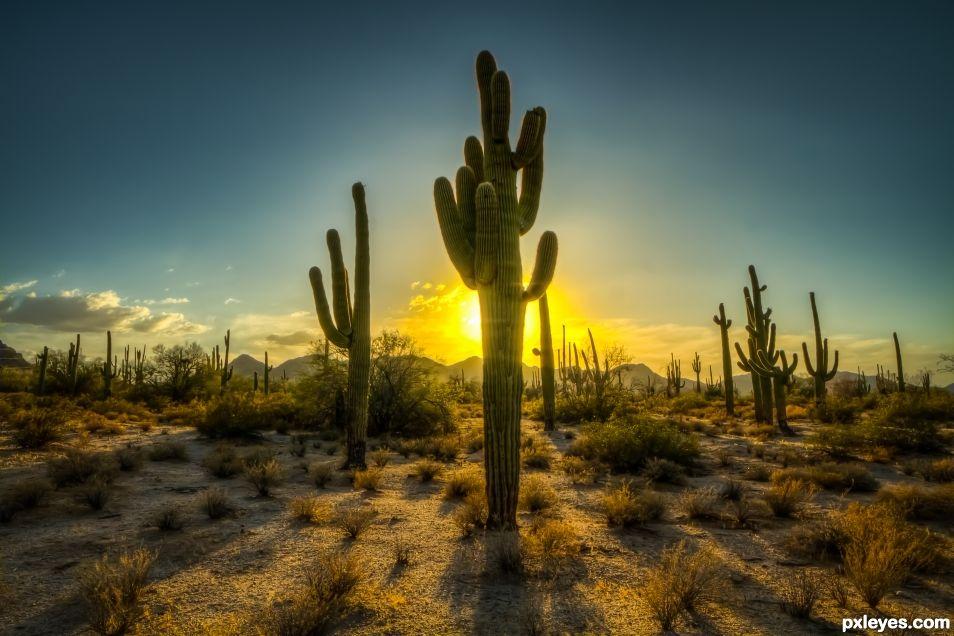 Saguaro Sunset