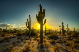 Saguaro Sunset Picture