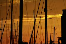 Silhouetted Masts