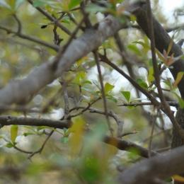 Shinig twigs Picture