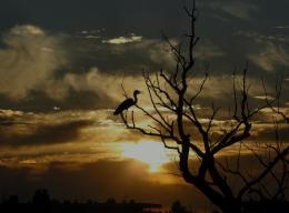 Lonelybird