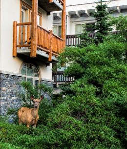 Balcony in the Wilderness