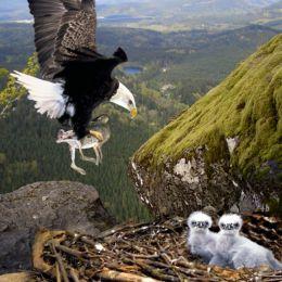 EagleNest