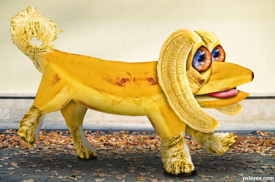 banana pooch