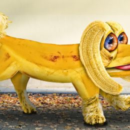 bananapooch
