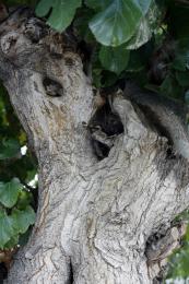 barkinupthetree