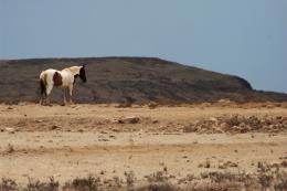 Lonelyhorse