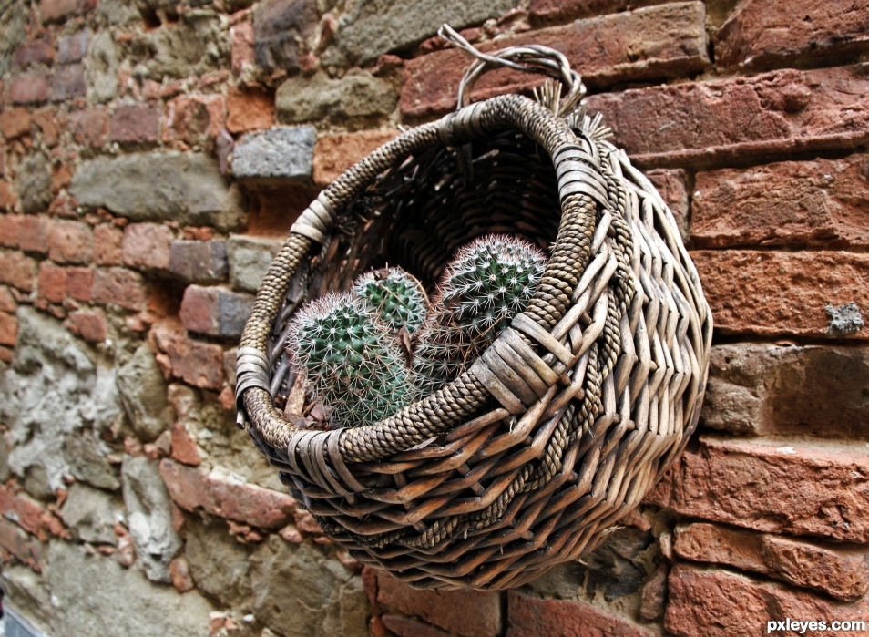 Basket and cactus