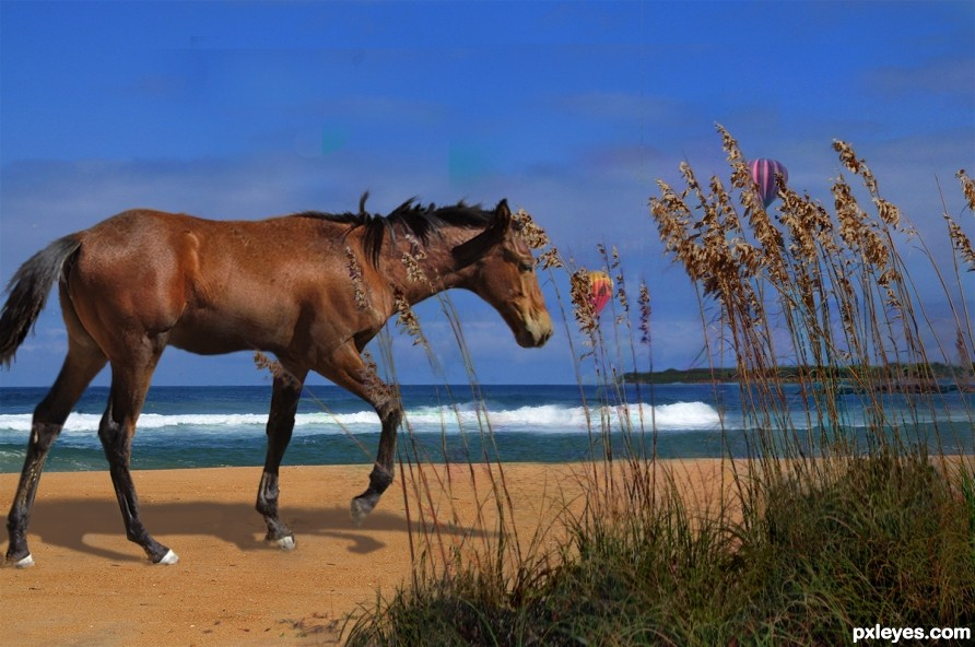 Wild Horse and Sea Oats