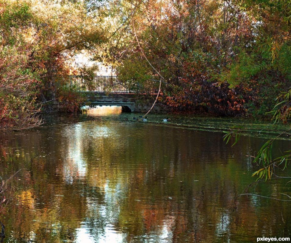 Wetlands Footbridge