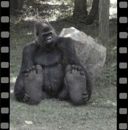 Bigfoot on film: 1922 Picture