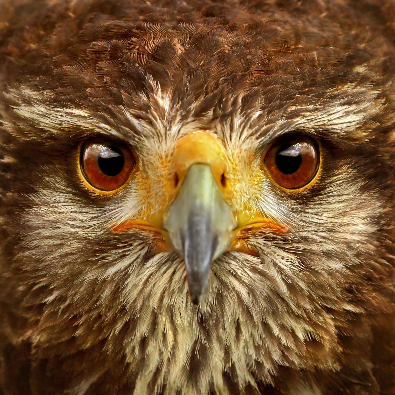 Bird Face - Photoshop Contest [28 entries]