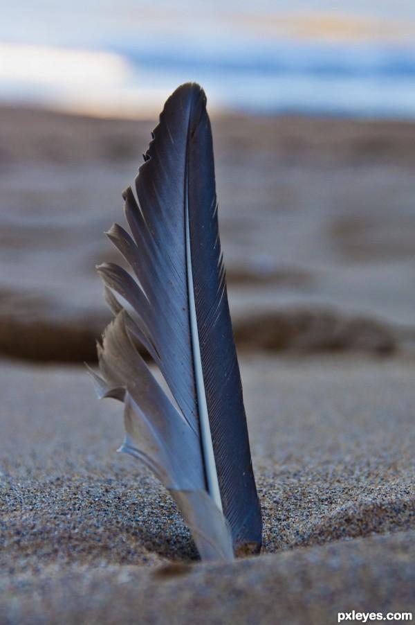 Forgotten Feather