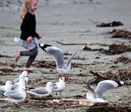 chasingthebirds