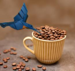 birdlikescoffee