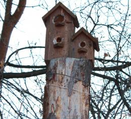 BirdHOME