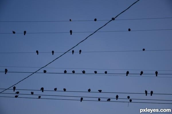 chillin birds