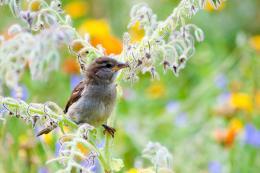 Bird in the summer