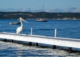 Pelicanonasunnyday