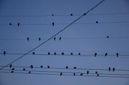 chillinbirds