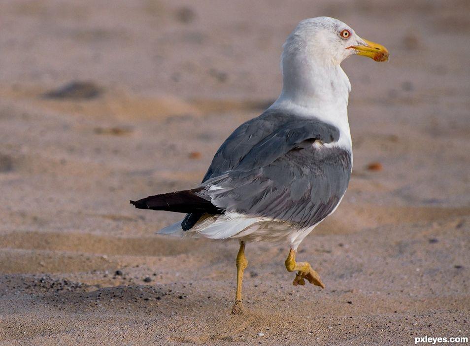 Beach Supervisor :-)