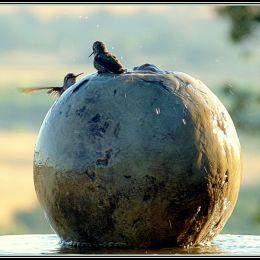BirdSpaRendezvous