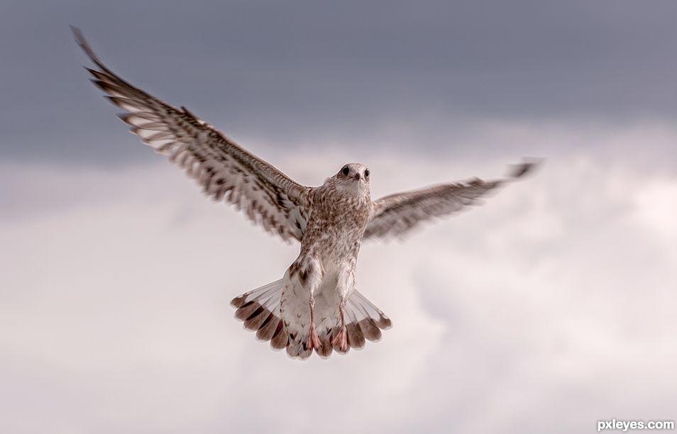 I am an Eagle