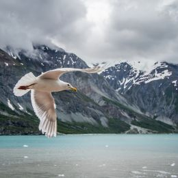 GlacierBayFlyby