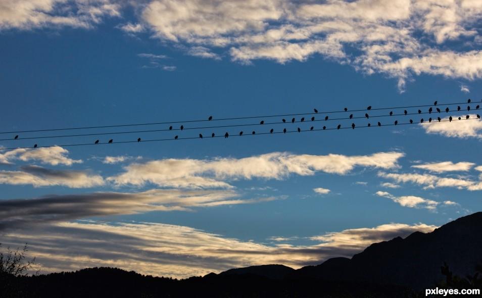Dawn Choir