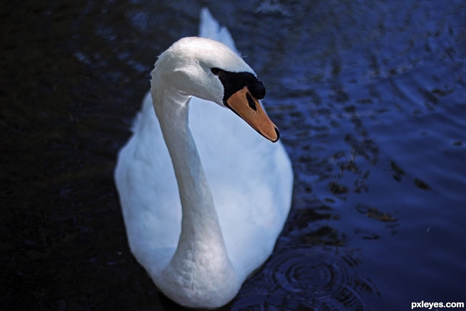 Hi, Im Swan. And you are?