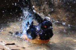 splash!!!!!