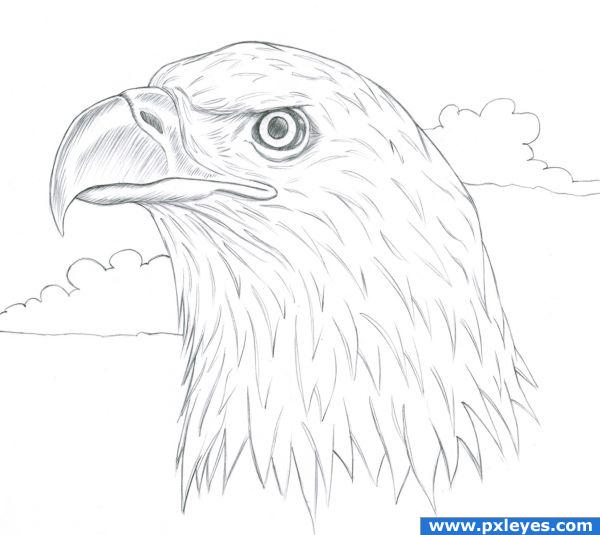 Realistic Eagle Drawings Bald eagle