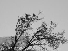 Birdsonatree
