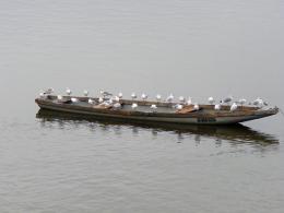 Crowdedboat