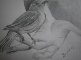 Canary Sketch