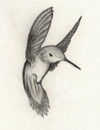 hmmmmmming bird