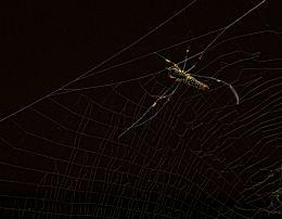 This Spider