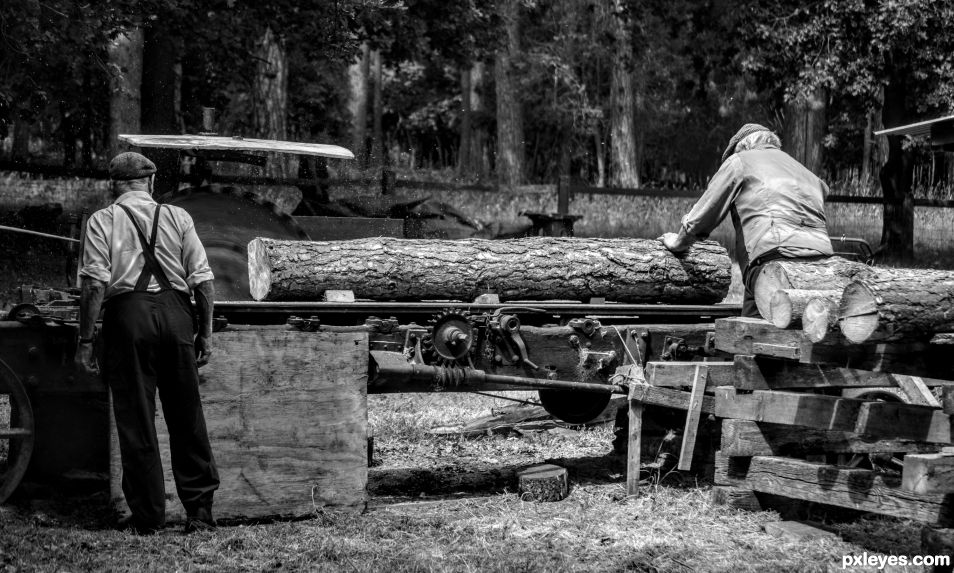 Sawing up Logs