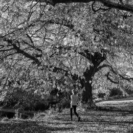 Largetree