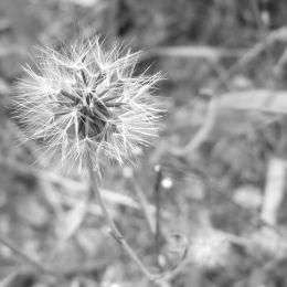 FlowerGonetoSeed