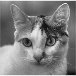 Maia The Cat