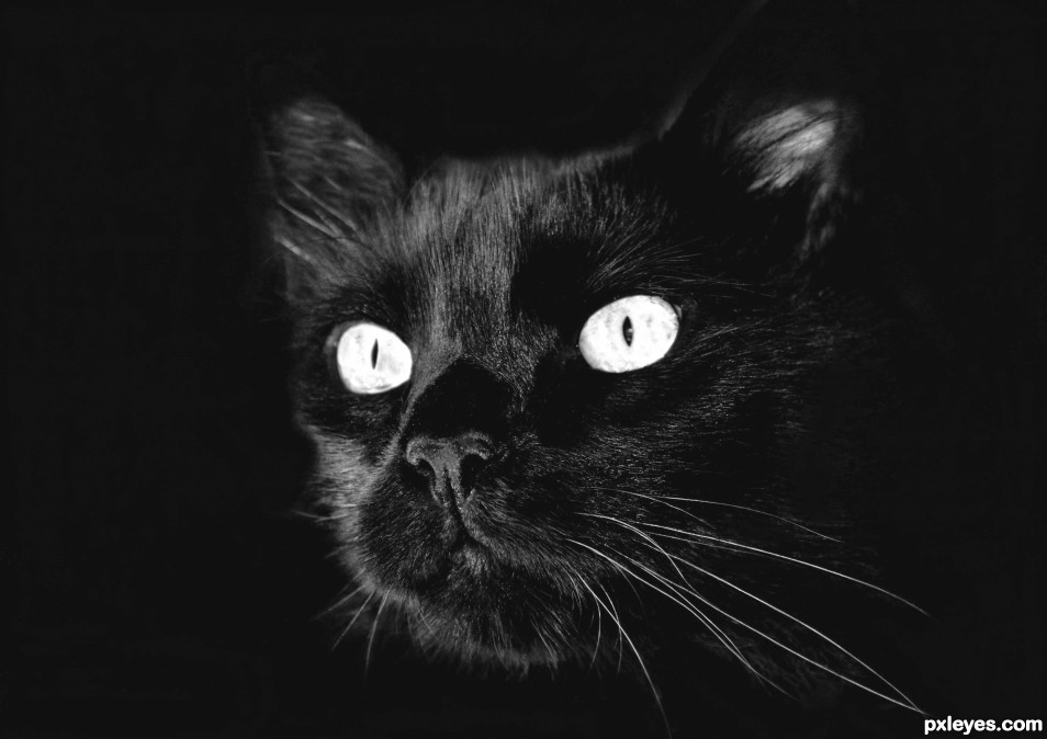 The eyes of the cat photoshop picture)