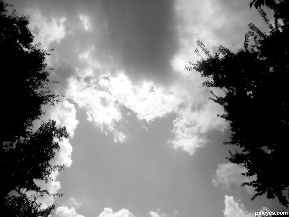 clouds and trees