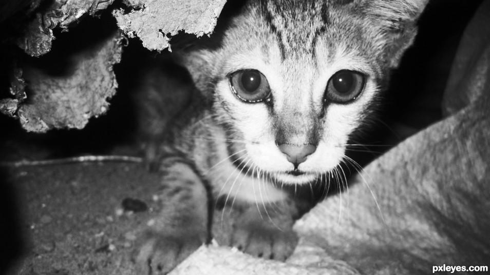 cutie catie