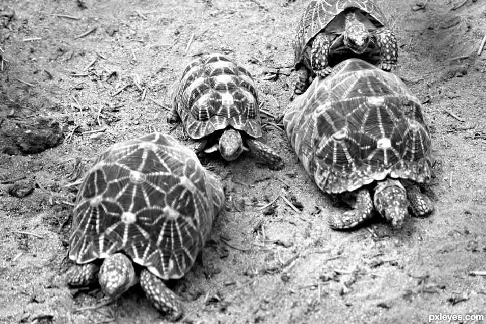 Tortoise family