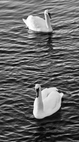 Gliding by...