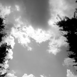 cloudsandtrees