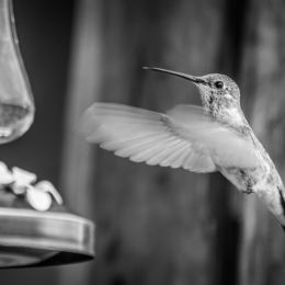 HumminginMonotone