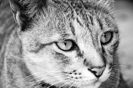 Staring cat...