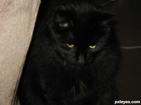 Of course, A black CAT